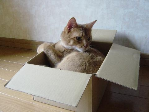 箱が好きなのよっ(2008.09.03)
