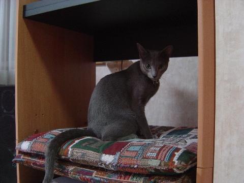 おすまし(2008.09.08)