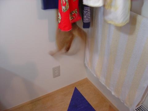 飛ぶのよっ!(2008.09.08)