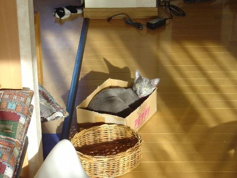 僕の場所にゃ...(2008.09.09)