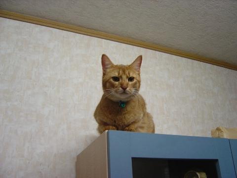 ここにもいったのよっ(2008.09.10)