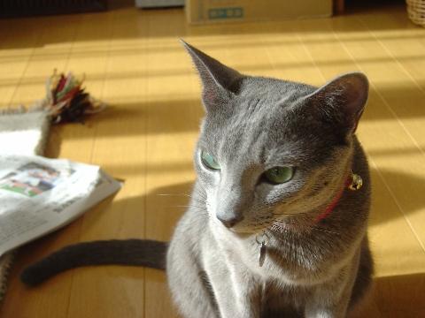 怒られたにゃ(2008.09.14)