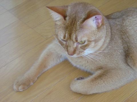 ニャンドル(2008.09.02)