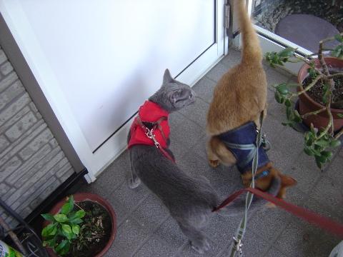 お散歩行くよ!(2008.09.15)
