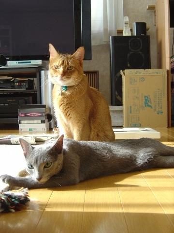ありがとにゃんにゃん!(2008.09.15)