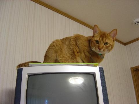 テレビの上なのよっ(2008.09.20)