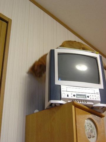 たんすの上なのよっ(2008.09.20)