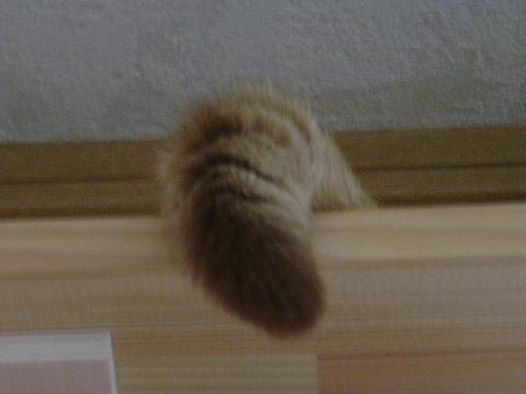 しっぽさん♪(2008.09.21)