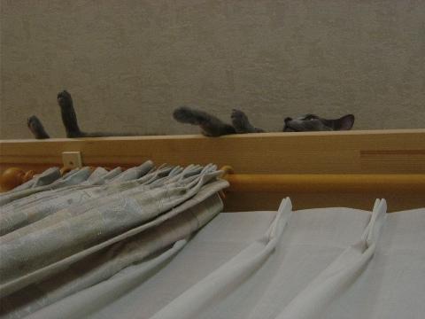 だらりんこ、真下(2008.09.22)
