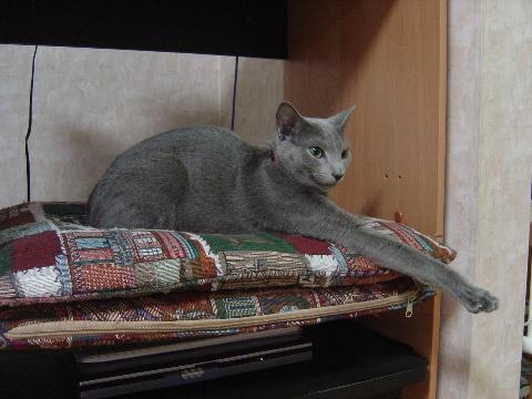 くつろぎー(2008.09.26)