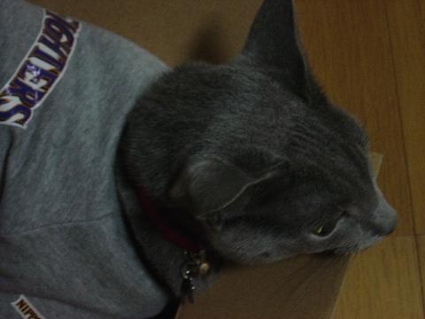 僕だってにゃ(2008.10.01)