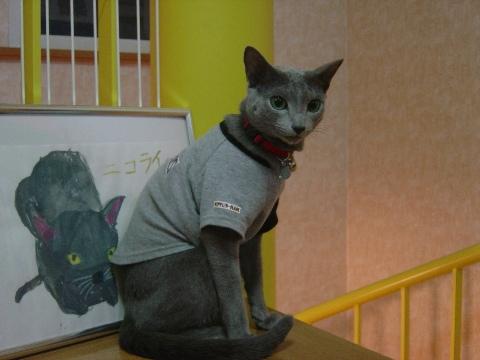 モデルねこさん(2008.10.01)