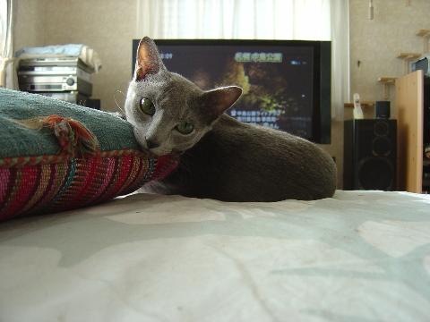 後ろ向きっ(2008.10.04)