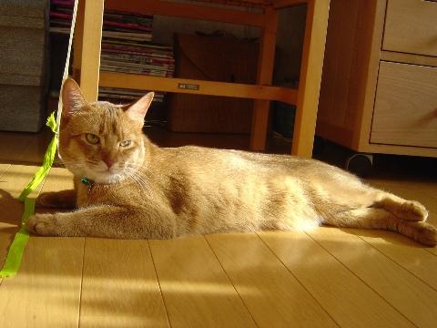 朝陽のジョゼフィンちゃん(2008.10.04)
