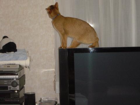 テレビだにゃ?(2008.10.09)