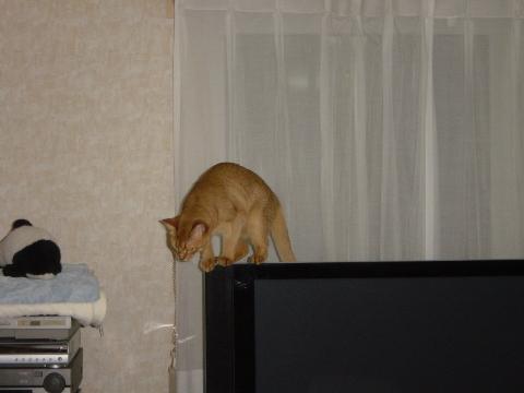 器用だにゃ(2008.10.09)