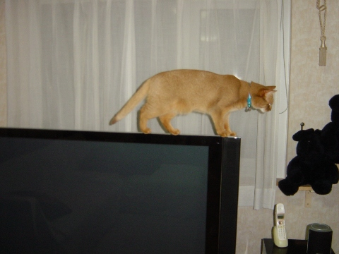 綱渡りかにゃ(2008.10.09)