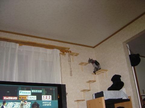 こんなところにゃ(2008.10.12)