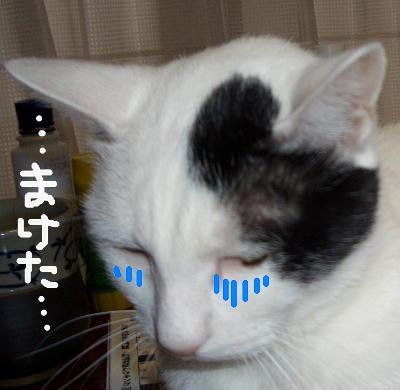 CIMG104851698.jpg