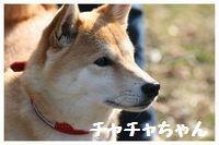 IMG_7868ちゃちゃちゃん