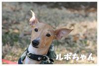 IMG_7910ルポちゃん