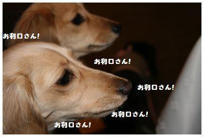 IMG_9721お利口