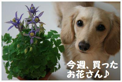 IMG_1114今週買ったお花