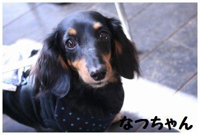 IMG_3821なつちゃん