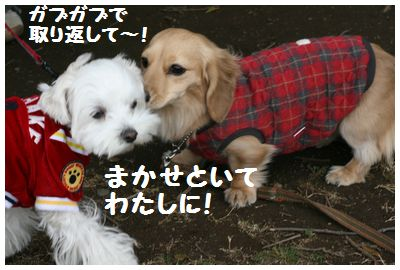 IMG_5838ユキチャン2
