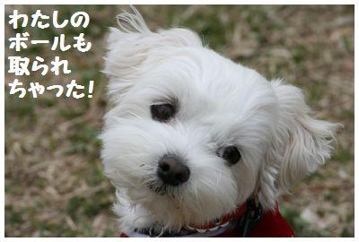 IMG_6012ユキちゃんポール