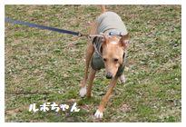 IMG_7123ルポちゃん