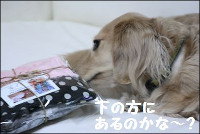 IMG_7998僕の2
