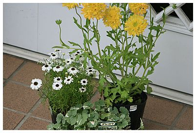 IMG_6174お花の苗