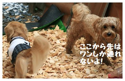 IMG_0577通行止め!