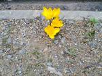 flower060305
