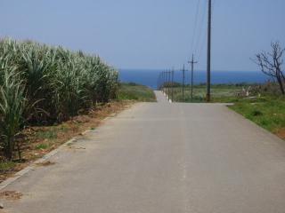 20070725_サトウキビ畑と海