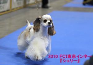 2010 『シェリー』_tokyointer_02