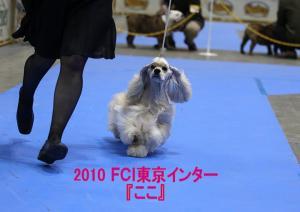 2010 『ここ』_tokyointer_01