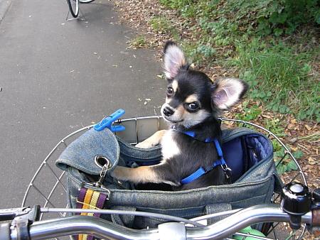 カイとサイクリング