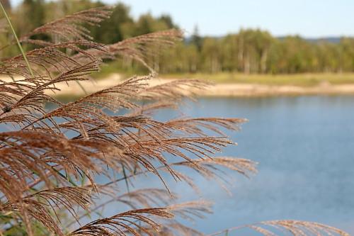 朱鞠内湖の小さな秋