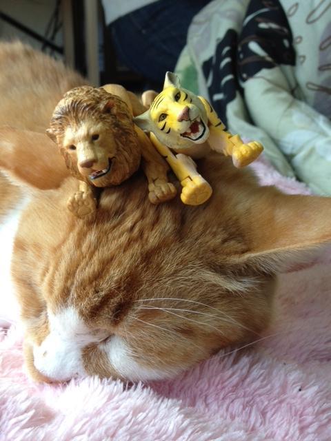 ミーコ on ライオン