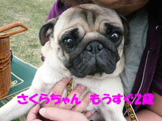 2008_0918kpz0013b.jpg