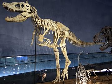 Tarbosaurus.jpg