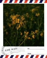 渥美菜の花4
