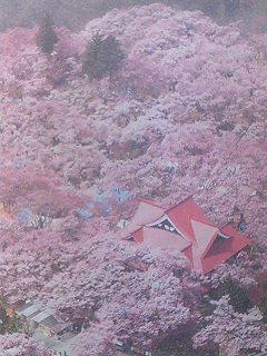 060419_takatoo-mankai.jpg