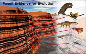 Evolution-FossilEvidence.jpg