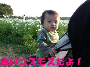 昭和公園2