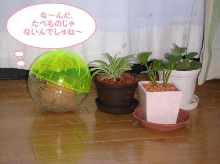 少しは植物観賞でもして心を落ち着かせてください・・・。
