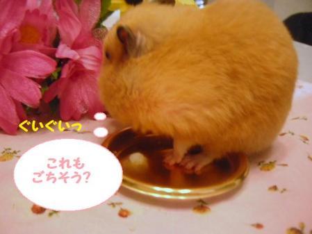 それは食べられません(;一_一)