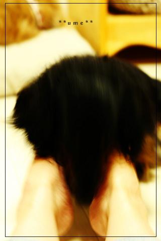 2008810ume2.jpg